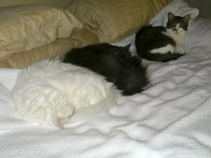Three cats in a king bed.